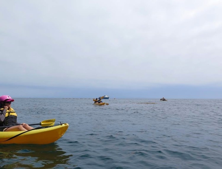 The guides set out in groups of 5-6 tandem kayaks.