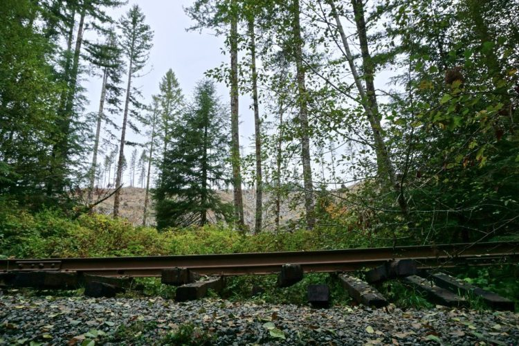 The storm eroded embankments and damaged tunnels, rendering the tracks impassable. Escalating costs dissuaded the Port of Tillamook Railroad from making repairs, and the rails have gone unused ever since.