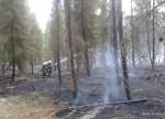 Pożar lasu w Solcy - 23.08.2015r (7)