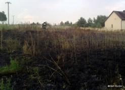 Pożar traw na Smoleniu - 09.08 (3)