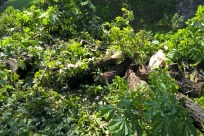 Usuwanie powalonego drzewa (1)