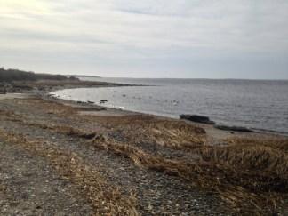 salt marsh water