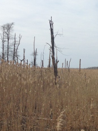 swamp wood
