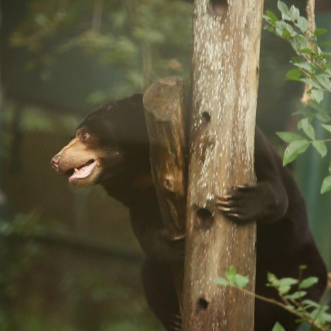 Moonbears-on-Planet-Earth-image-gallery-1
