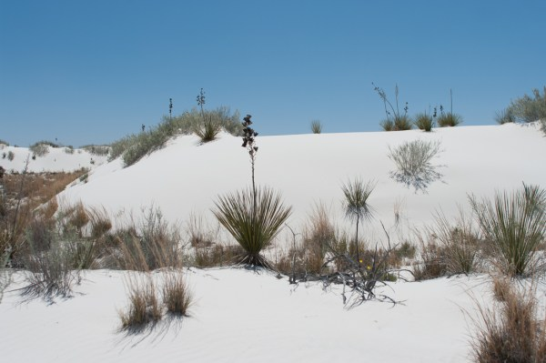 Plants on the Dunes
