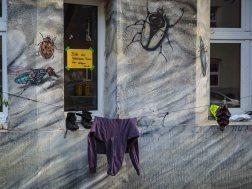 Christian Bolte hat die gesamte Fassade eines Hauses mit Käfern und Insekten bemalt