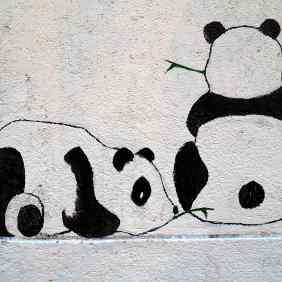 zwei Pandas