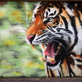 ein sehr realistisch gezeichneter Tiger