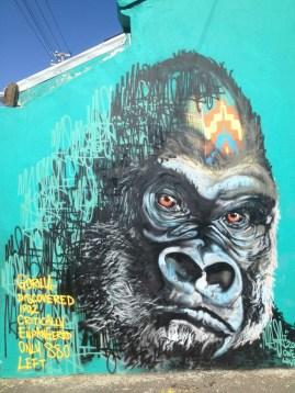 Cape Town Gorilla
