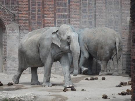 Elefants in Leipzig Zoo