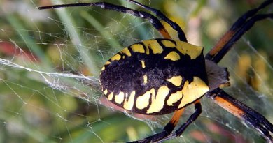 Dec. 1: Lecture at ROM on 'friendly spiders'