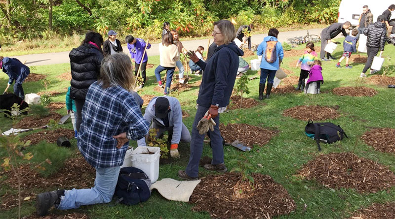 planting of trees later vandalized