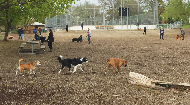 Dogs distancing in off-leash area