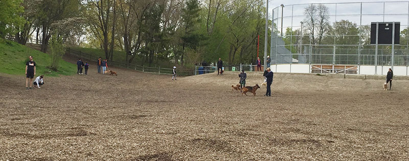 People keep distance at off-leash area