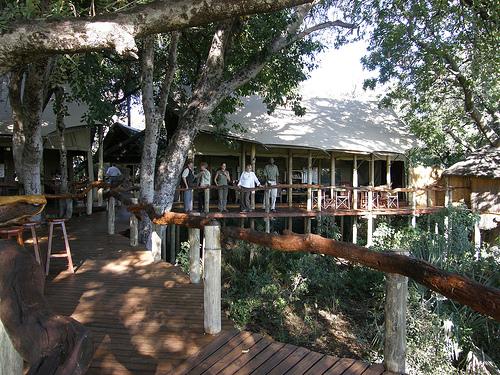 56th Image Tubu Tree Grounds