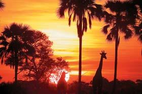 Tubu Tree Afternoon & Sunset