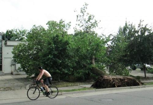 Tree Blowdown