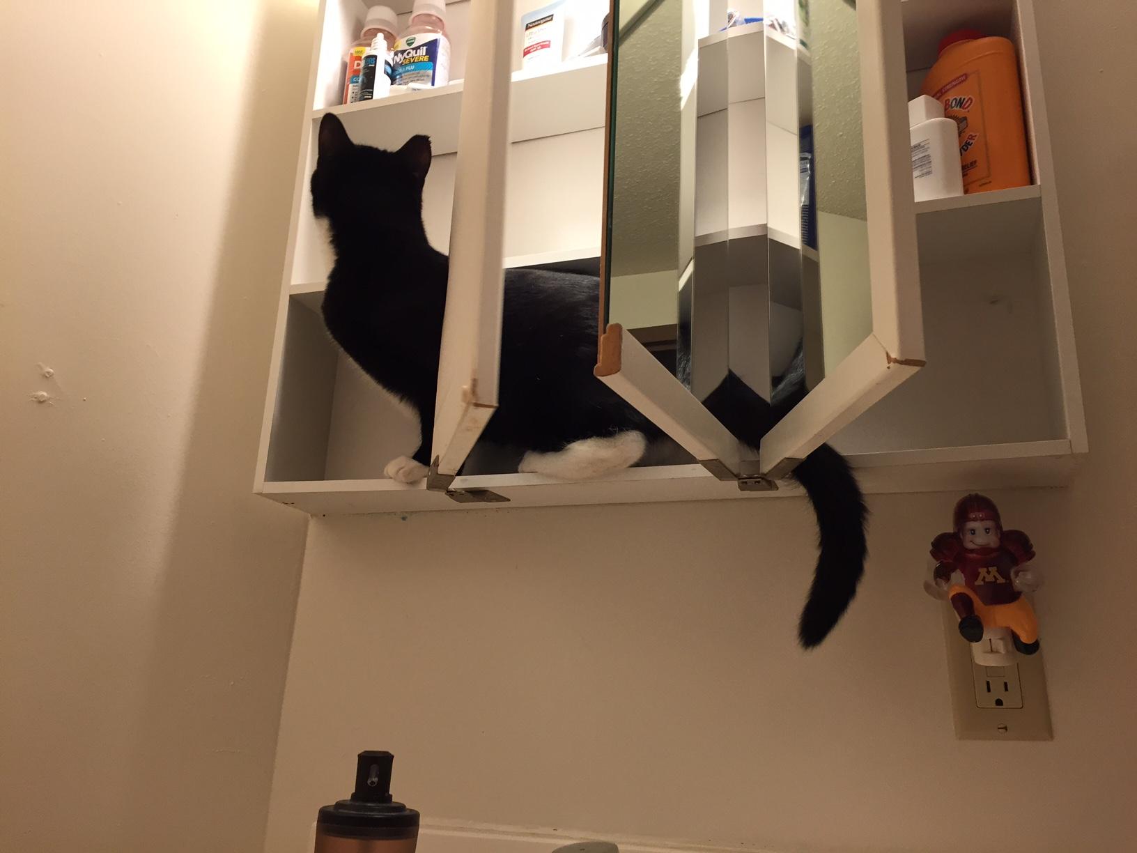 Nibbler Cabinet