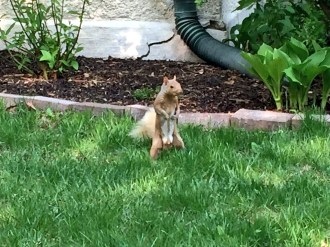 Friendly squirrel