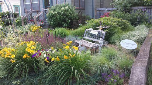 Rain Garden (With Wildflowers, Weeds, and Bees) at 2631 Buchanan Street NE