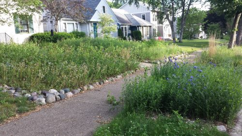 Not a Lawn, An Ecosystem
