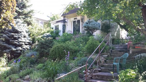 Plantings on a Hilly Property (2800 Block of Taylor St NE)