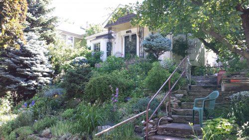 Plantings on a Hilly Property (2800 Block of Taylor St NE)