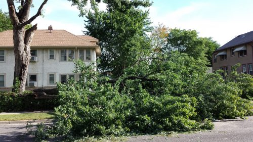 Tree Limb on 300 Block of 23rd Avenue NE