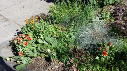 This Boulevard Garden in the 2800 Block of Arthur Street Includes Cacti