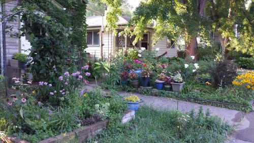 Gardens and a Bungalow on Penn