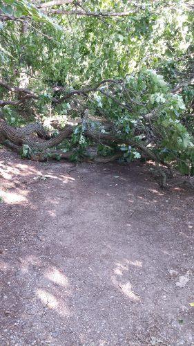 Oak Tree Across the Trail at Cedar Lake Point