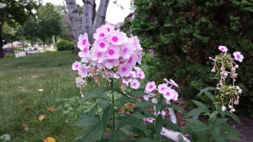 The Flowers of Bryn Mawr, Part 5