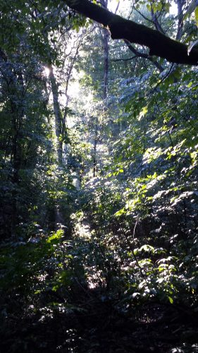 Eloise Butler Woodland Area
