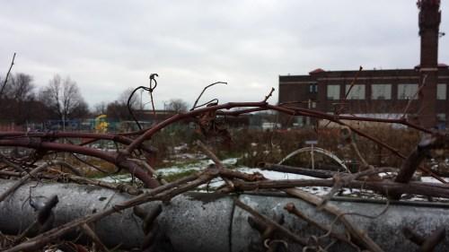 Vine-Encrusted Community Garden Fence at Sabathani Community Center