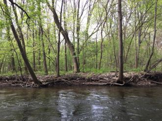 Minnehaha Creek trees