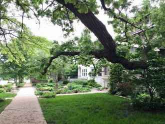Burr Oak on Lyndale Avenue S