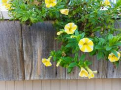 Yellow and white striped flowers