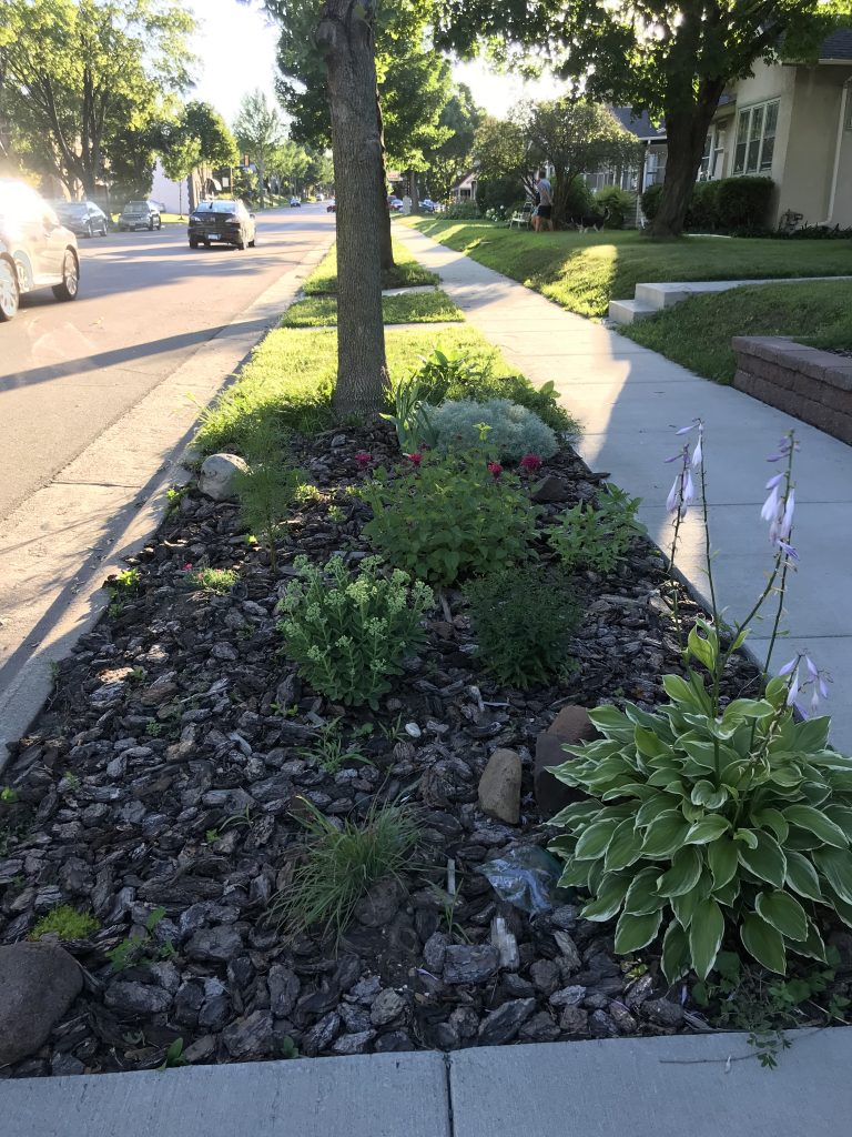 narrow garden between sidewalk and street, filled with bark mulch and several green plants