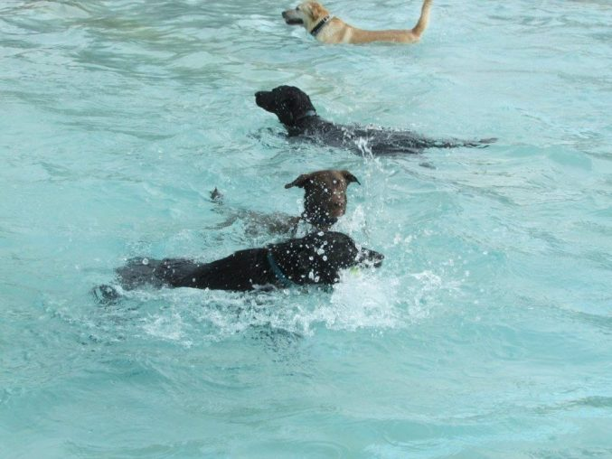 4 dogs in swimming pool