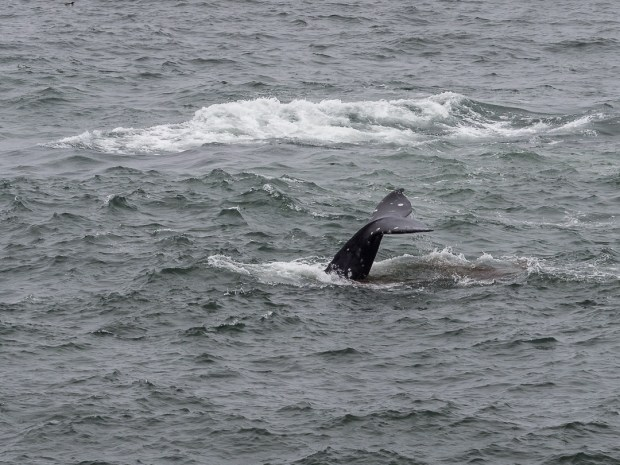 Onshore Whalewatching  1/250 sec - f/6,3 - ISO 200 - 150mm