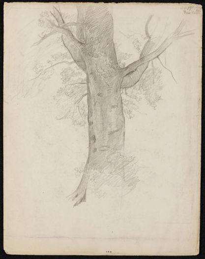 Enchanted Garden Waterhouse tree-001
