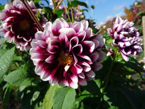 Fall Flowering 5