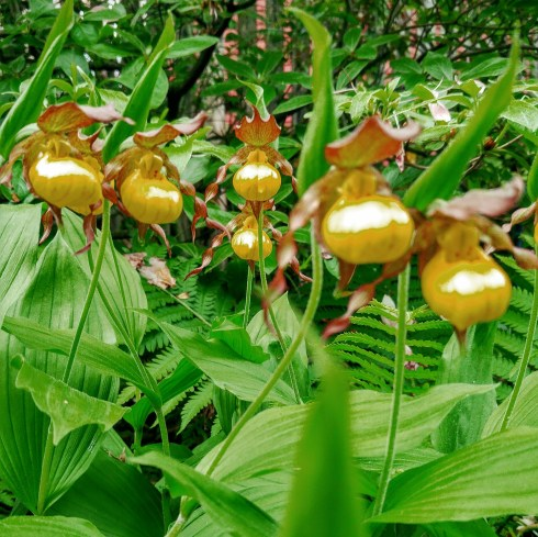 lady slippers 5