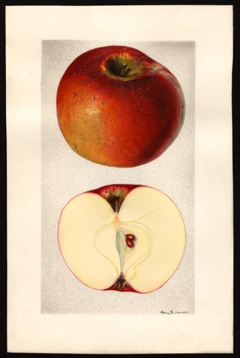 hubbardston-apple-arnold