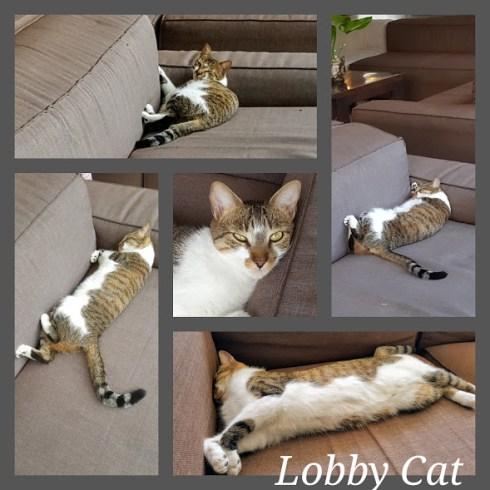 Caribbean Cats 4
