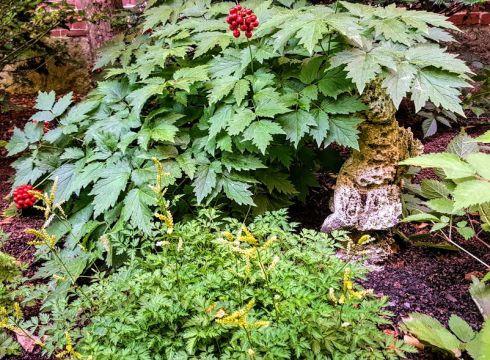 Garden 6