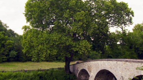 witness-tree-sycamore-burnside-bridge-antietam-620