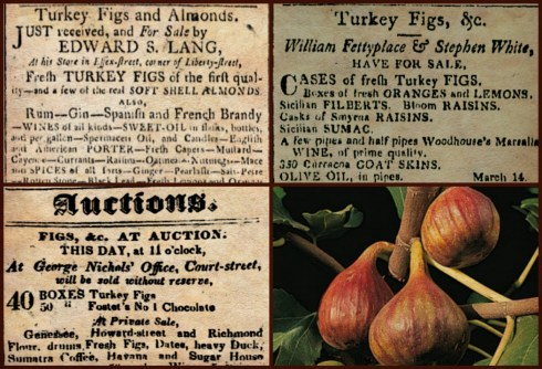 Fig Collage 1804 1829