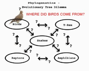 Dilemma - Phylogenetic