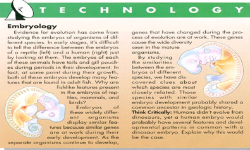 Evolution - Embryology